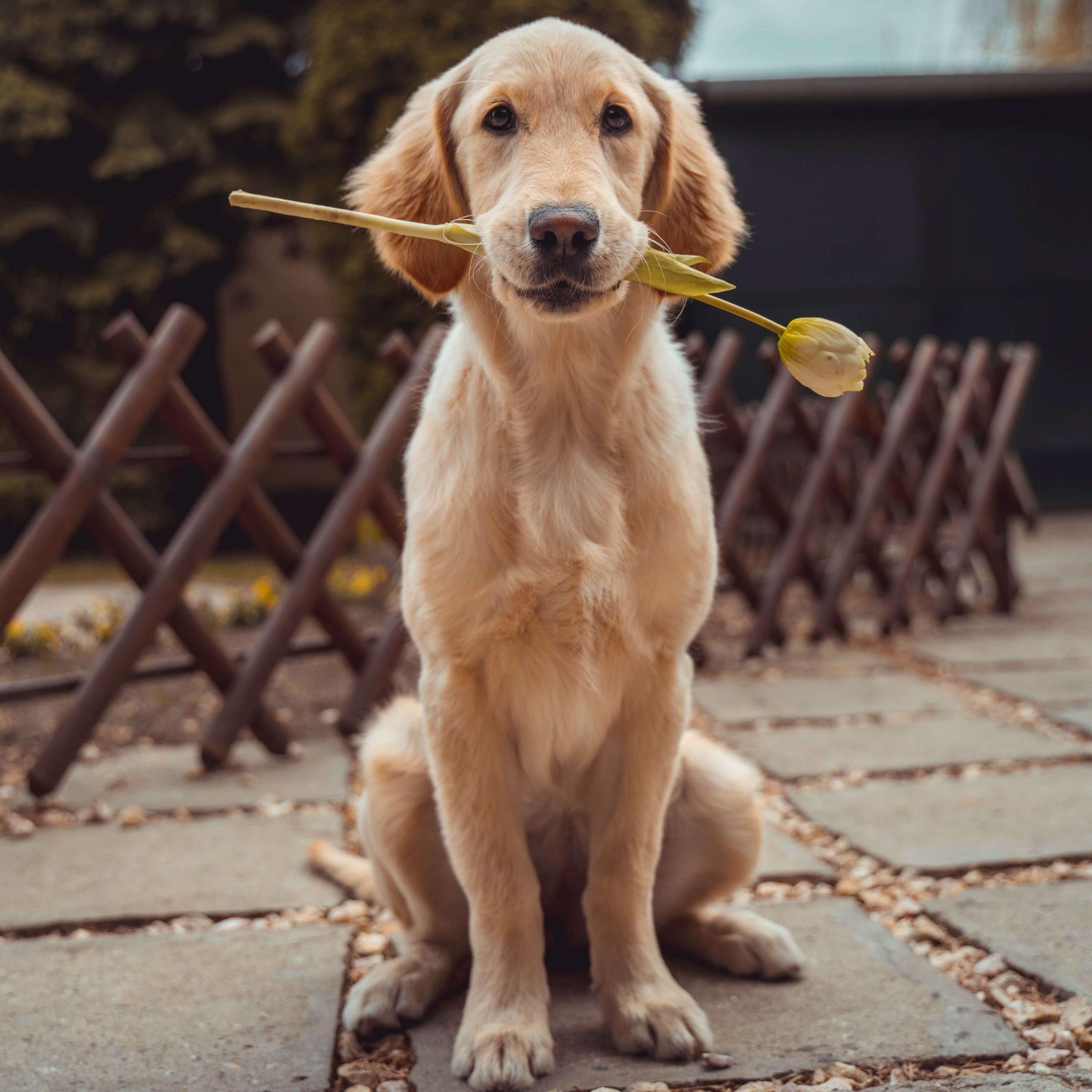Aufwendungen für einen sog. Schulhund als Werbungskosten